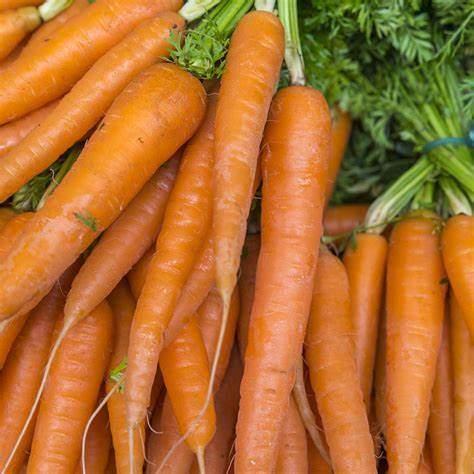 Carrot All Seasons