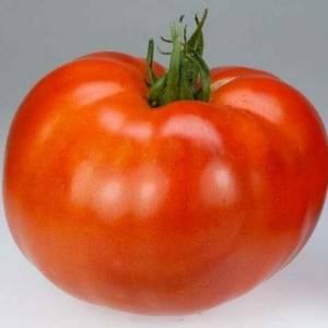 Colonial Tomato