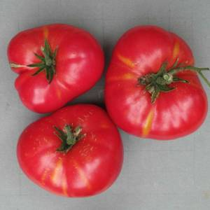 Red Russian Tomatoes