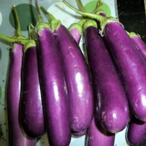 Eggplant Long Purple